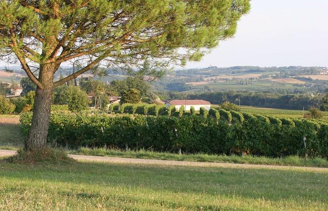 DOMAINE DE CHIROULET 1 - Larroque-sur-l'Osse